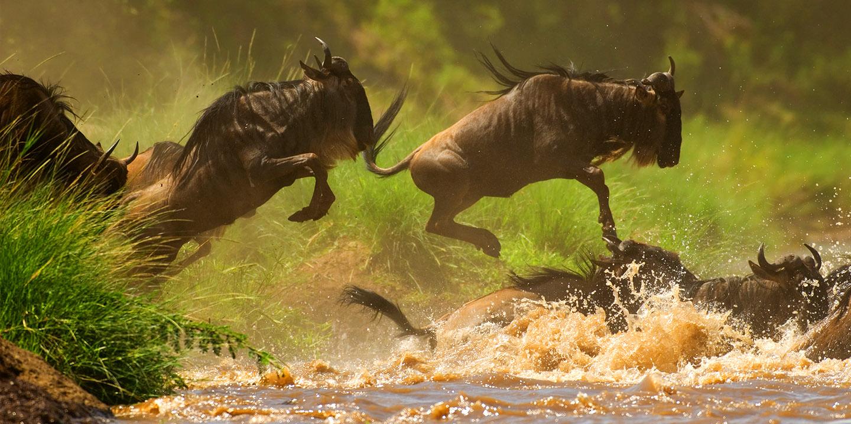 P2:肯尼亚、坦桑尼亚大环线猎奇迁徙16日-(◆◆◆我们将拍摄动物大迁徙的主战场放到了占东非大草原90%面积的坦桑尼亚景内;马塞马拉草原、塞伦盖蒂草原各住3晚 )